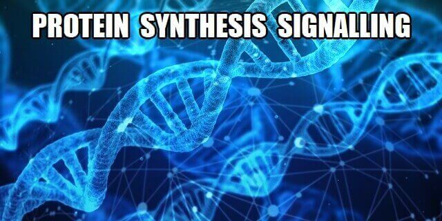 protein synthesis signalling