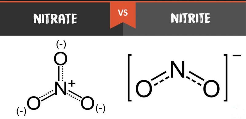 nitrate conversion to nitrite