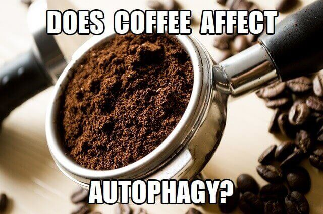 does coffee affect autophagy
